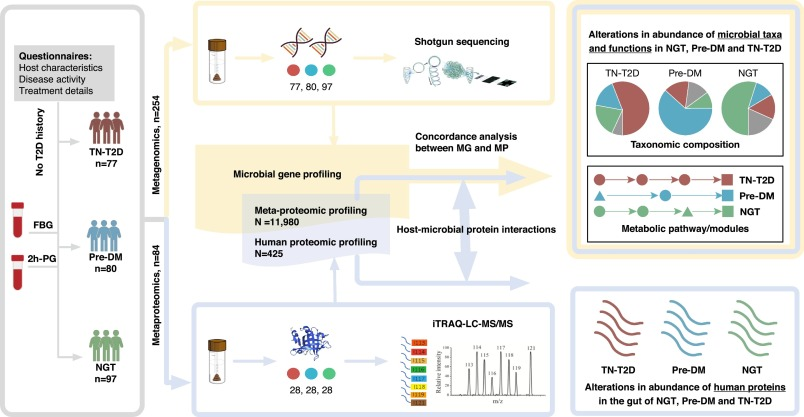 Distinct gut metagenomics and metaproteomics signatures in prediabetics and treatment-naïve type 2 diabetics